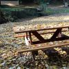 Sonbahar Masa Örtüsü