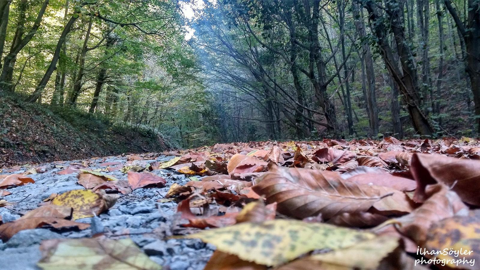 Yaprak Sıkılmıştı Ağaçtan, Bahaneydi Sonbahar.